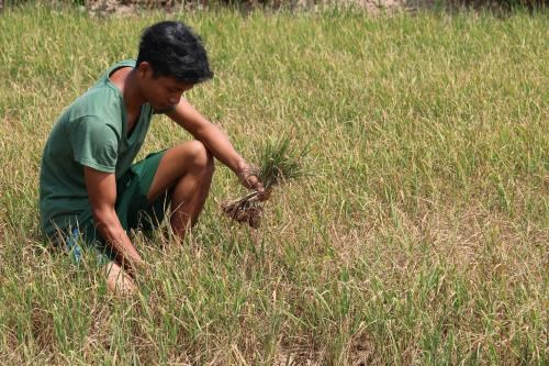 3月份越南南中部和南部旱情和海水入侵现象日趋严峻 hinh anh 1