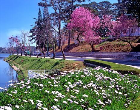 大叻市的鲜花汇聚之地——大叻市花园 hinh anh 1
