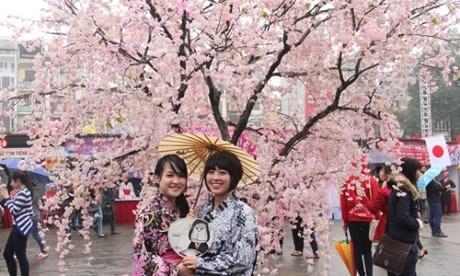 2016年下龙樱花节将于本月18日开幕 hinh anh 1