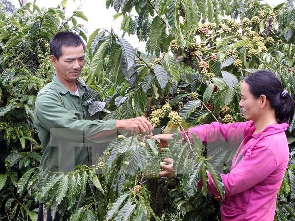 今年前两个月同奈省咖啡出口量达5.4万吨 hinh anh 1