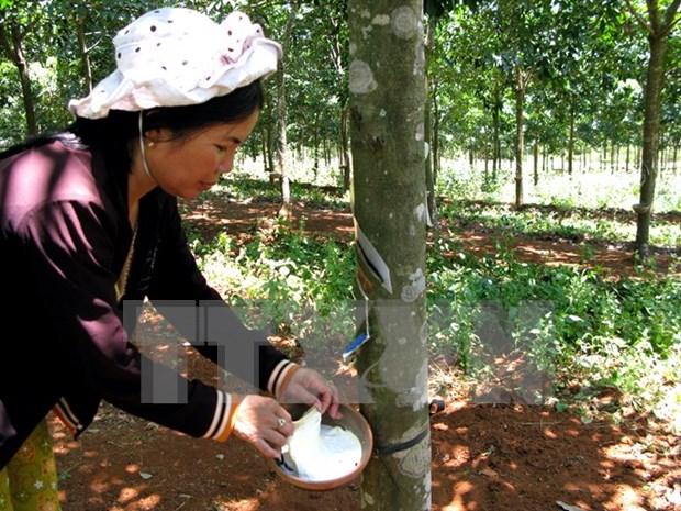 2016年印尼橡胶产量可达310万吨 hinh anh 1