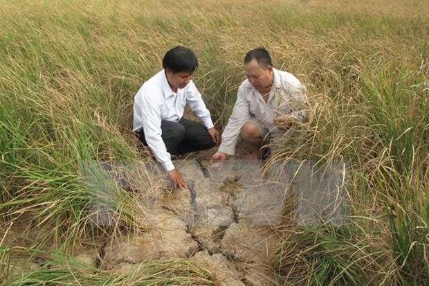 越南九龙江三角洲13个省市全都出现海水入侵现象 hinh anh 1