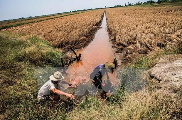 海水入侵日益严重 九龙江平原地区农业将面临严重困境 hinh anh 1