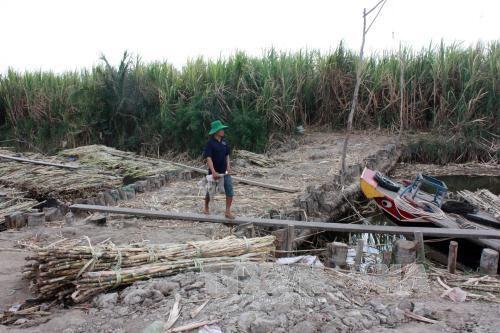 发展伙伴和赞助商就越南应对干旱与海水入侵建言献策 hinh anh 1