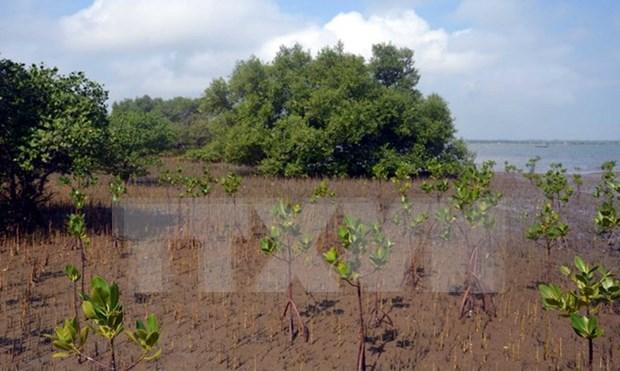 韩国资助190万美元 用于协助越南种植红树林 hinh anh 1