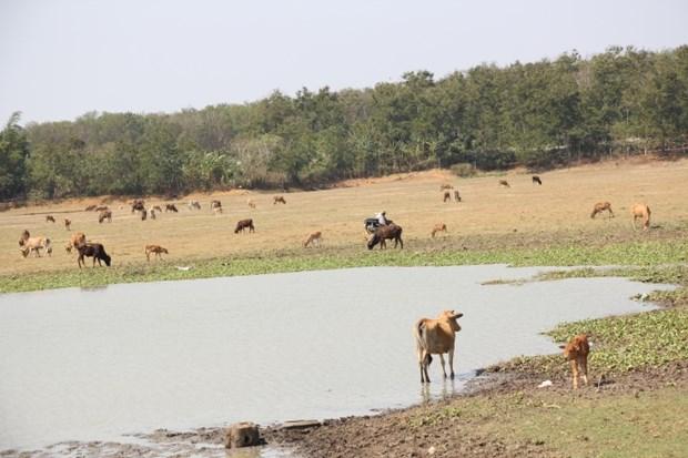 努力不让西原地区人民因旱情受饥饿和缺乏生活用水 hinh anh 1