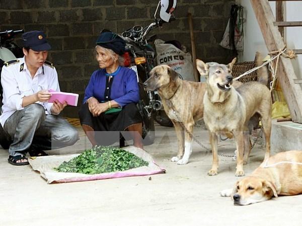 东盟动物卫生与人畜共患病协调中心成立在即 hinh anh 1