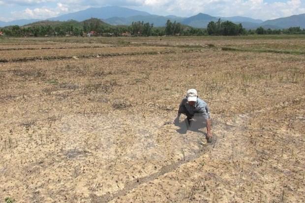 九龙江平原旱情和海水入侵日趋严重 hinh anh 1