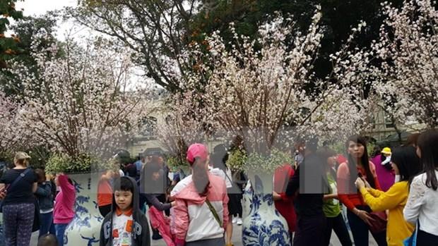 2016年日本樱花节于本月中旬在升龙皇城举办 hinh anh 1