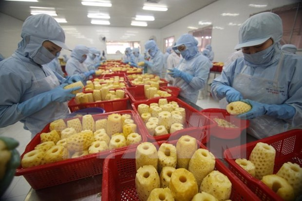 世贸组织高度评价越南在推进贸易发展中所取得的成绩 hinh anh 1