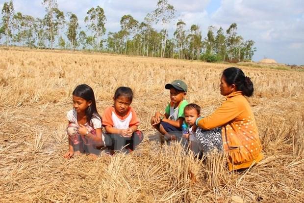 干旱与土地盐碱化致越南各地受灾严重经济损失达2.8亿美元 hinh anh 1