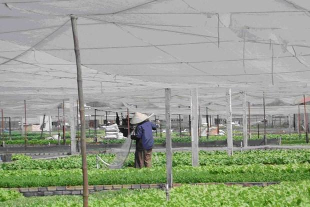 越美促进农林水产领域的合作与贸易往来 hinh anh 3