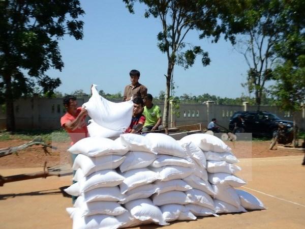 政府总理指导向嘉莱、老街两省无偿下拨975吨大米 hinh anh 1