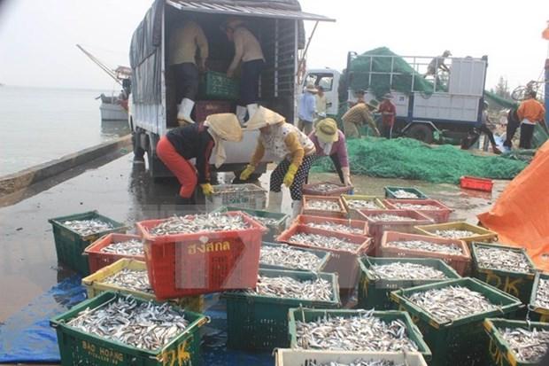 越南加快中部大批鱼死亡事件的原因调查工作 hinh anh 1