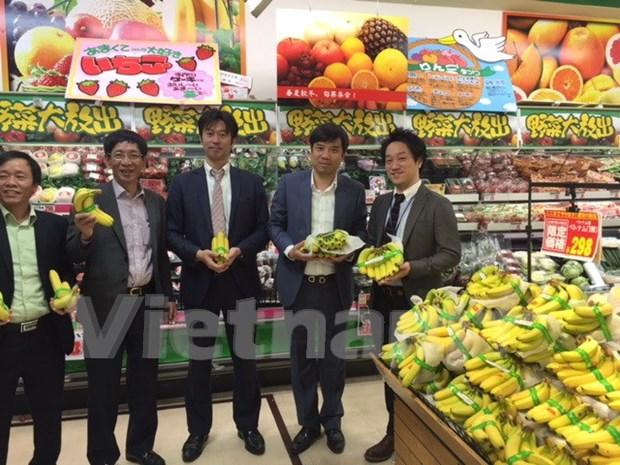 越南香蕉在日本受到好评 hinh anh 1