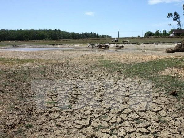 日本为越南克服干旱和海水入侵资助250万美元 hinh anh 1