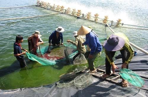 欧盟协助越南构建越南虾类可持续发展价值链 hinh anh 1