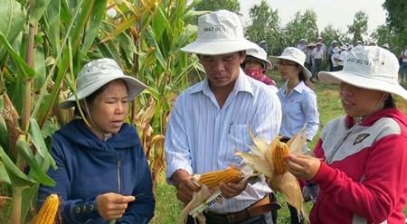 越南富安省营造良好的投资环境 hinh anh 1