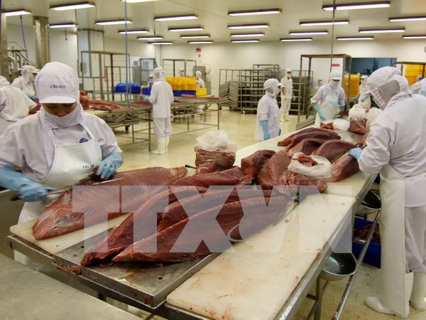 越南要求鲶鱼出口企业加大对其产品质量安全的监管力度 hinh anh 1