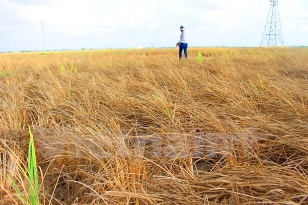 日本向越南旱区灾民提供250万美元援助资金 hinh anh 1