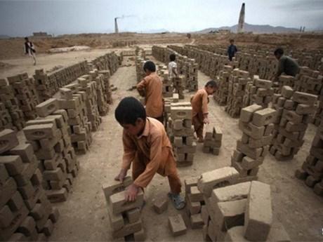 越南努力防止和减少童工现象 hinh anh 1