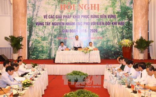 阮春福总理要求明确森林管理与保护工作主体责任 hinh anh 1