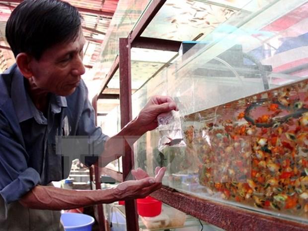 胡志明市观赏鱼出口额达约700万美元 hinh anh 1