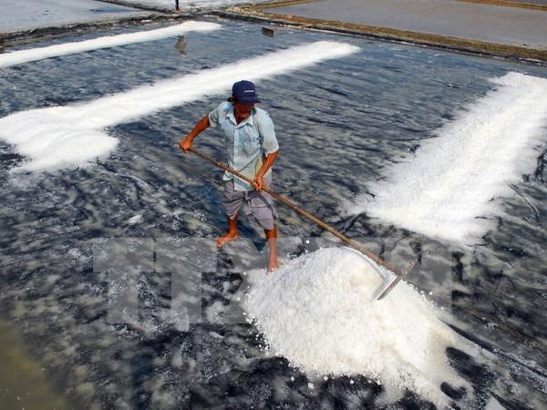 越南政府副总理王廷惠指导2016年海盐购储工作 hinh anh 1