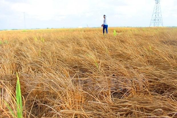 越南政府拨款援助受旱灾严重地区 hinh anh 1