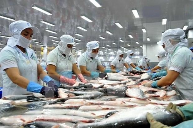 2016年上半年越南查鱼出口总额达6.16亿美元 hinh anh 1
