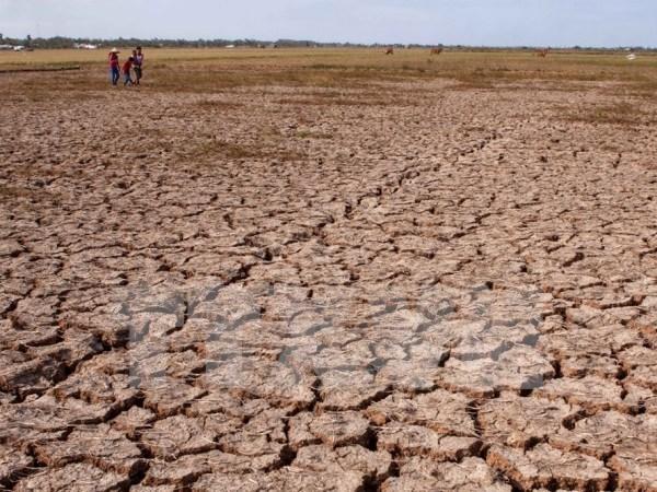 美国向越南提供50万美元紧急援助 用于克服旱灾和海水入侵后果 hinh anh 1