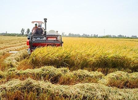 永隆省制定农业与农村领域招商引资项目43个 hinh anh 1