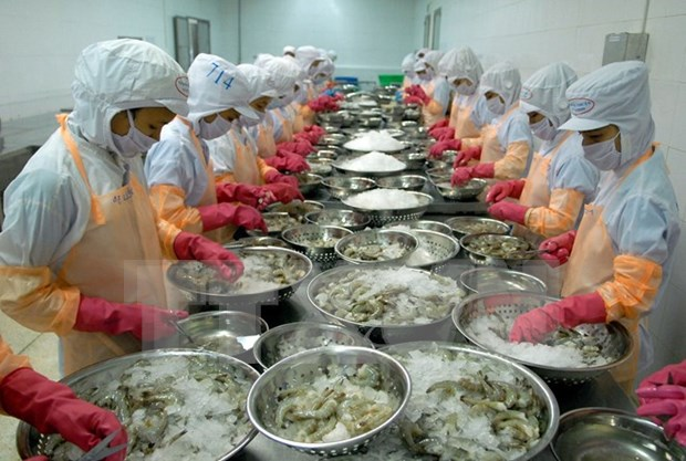 越南虾类出口位居英国市场第一位 hinh anh 1