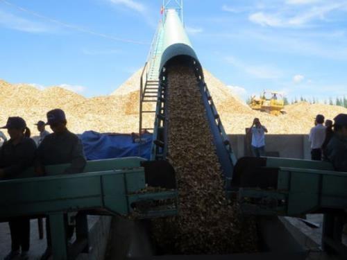 越南富安省最大木屑加工厂正式投入运营 hinh anh 1