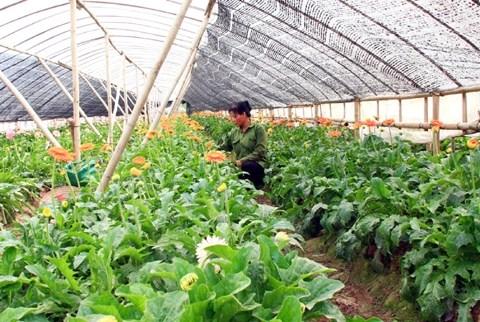 河内市加大科技应用促进农业生产发展 hinh anh 1