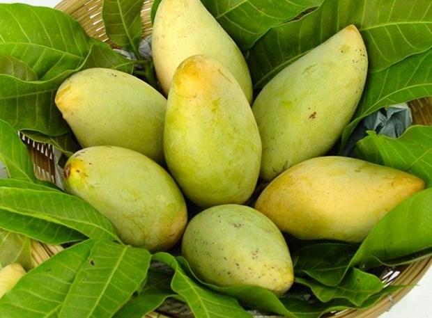 美国拟允许进口越南芒果和牛奶果 hinh anh 1