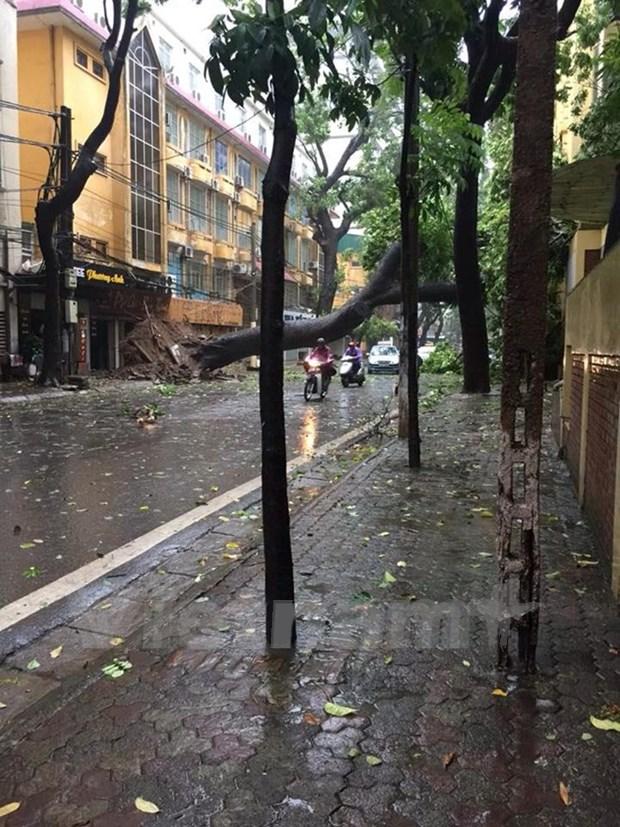 未来24小时热带低压有可能增强为台风 hinh anh 1