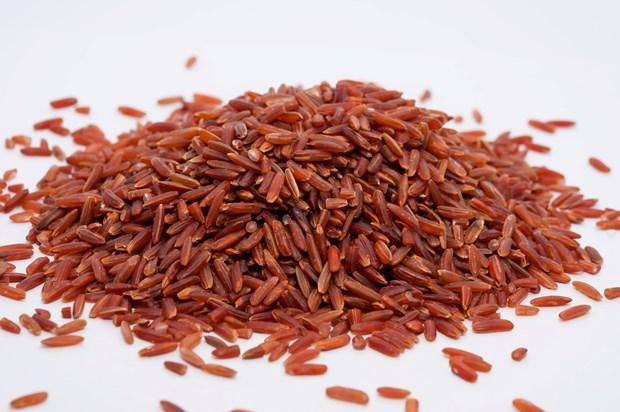 广治省拟兴建大米制品粗加工和加工厂 hinh anh 1