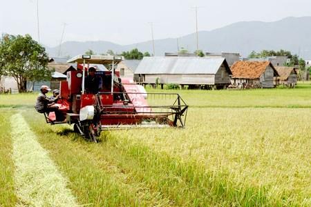 力争2020年前达到新农村建设标准的乡份总数约占50% 农民收入增加近一倍 hinh anh 1