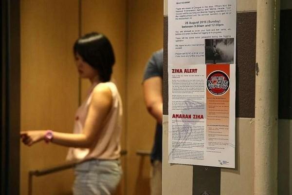 新加坡新增40起感染寨卡病例 hinh anh 1