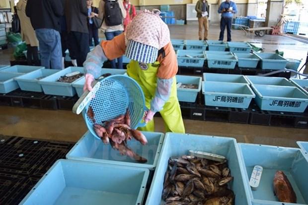 日本宫城县帮助各水产企业向越南出口海产品 hinh anh 1