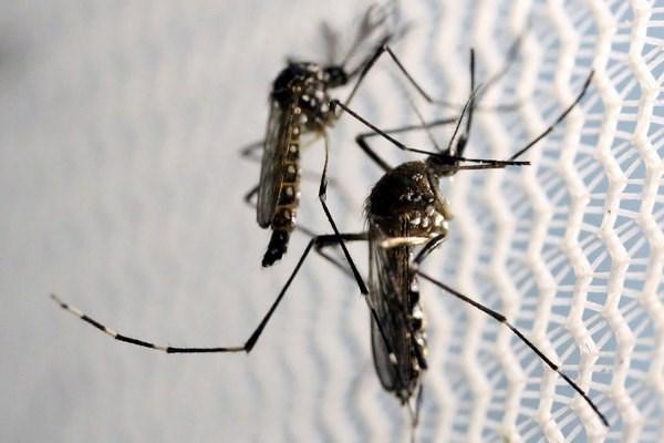 越南卫生部:密切监控寨卡病毒疫情 早日发现感染病例 hinh anh 1
