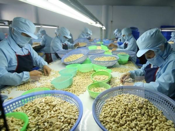 今年前8月越南腰果出口额同比增长12.7% hinh anh 1