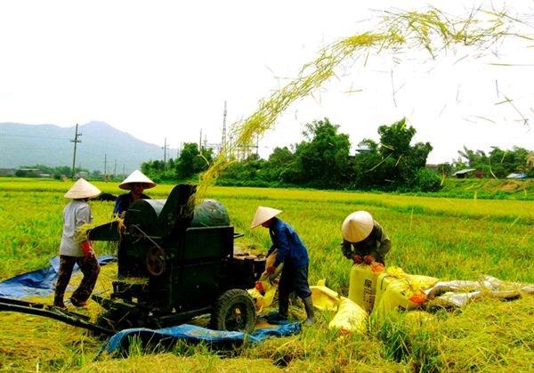 力争到2020年全国50%的乡镇达新农村标准 hinh anh 1