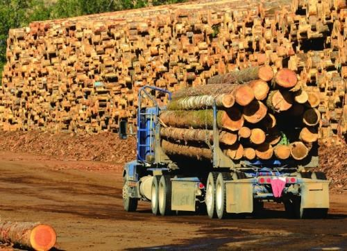缅甸政府允许恢复2017-2018财年木材生产 hinh anh 1