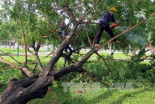 """越南各地尽快进行四号台风灾后修复重建工作并主动应对超强台风""""莫兰蒂"""" hinh anh 1"""