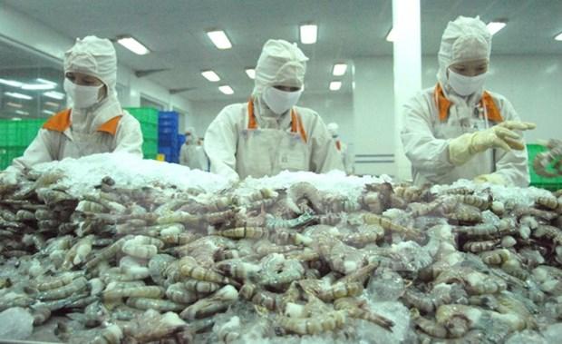 越南鲜活虾对澳大利亚出口前进广阔 hinh anh 1