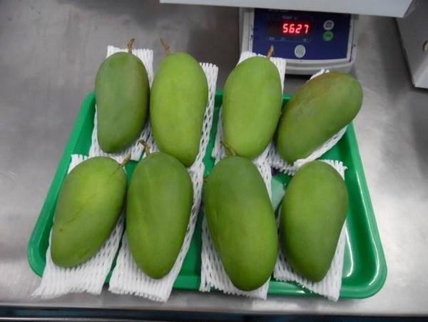 越南首批新鲜芒果亮相澳大利亚市场 hinh anh 1
