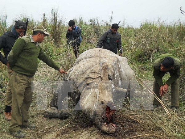 越南代表出席CITES第17届缔约国大会 hinh anh 1