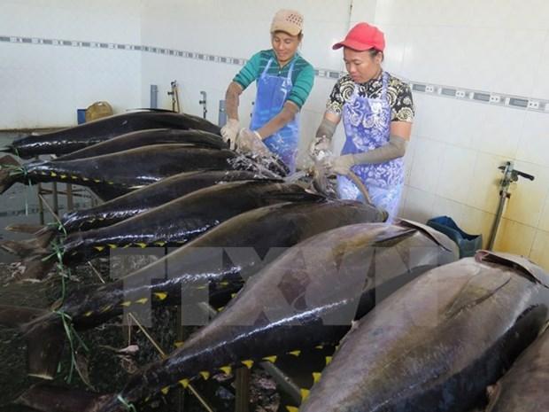 越南金枪鱼出口将继续增长 hinh anh 1